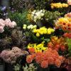 敬老の日の花のプレゼントを自分で作ろう❣ 花選びで失敗しない方法