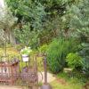 秋の庭 色々なお庭を参考にして試してみましょう❣