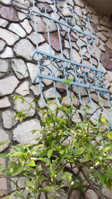 大きな門をくぐると壁伝いにあるアイアンの装飾