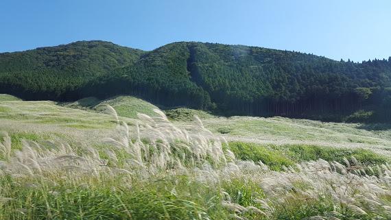 仙石原公園 見渡す限りススキの平原
