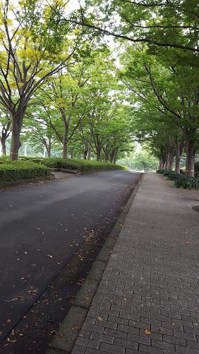 秋の柔らかい木漏れ日が気持ち良い