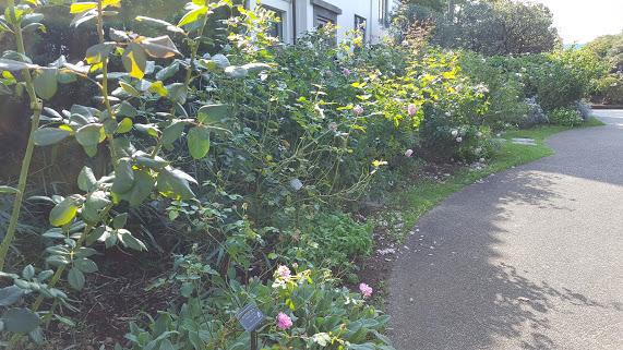 庭へ出るまでの小道