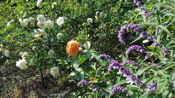 秋も様々なお花の競演