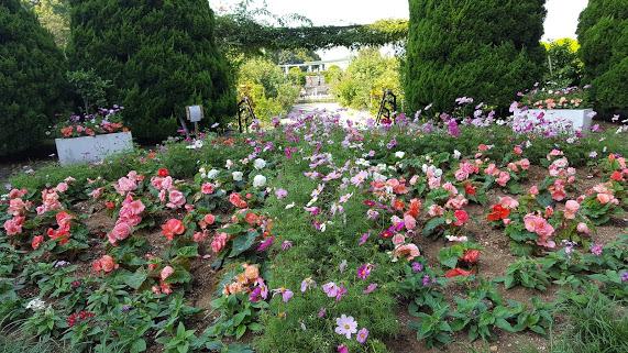大きなサークルの花壇は季節の草花が植えられます