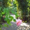 横浜山手西洋館 イギリス館・港の見える丘公園のイングリッシュガーデン