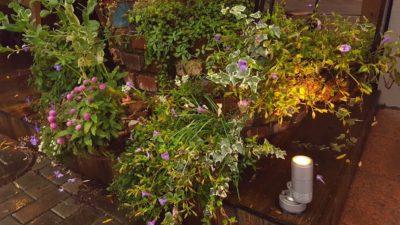 大きなレンガで作られたプランターとお花たち
