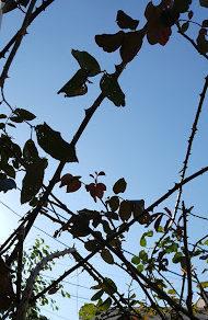 夏を過ぎて天に向かって伸びる枝