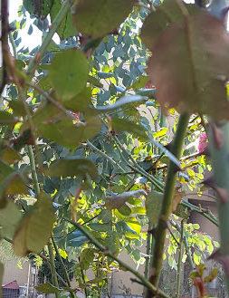 ジャングル化して暗くなった木の根元