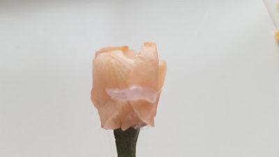 花芯を包み込むように貼る