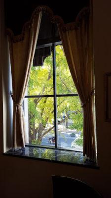 素敵な窓から見る銀杏並木