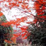 横浜の名所 桜だけじゃない、紅葉も楽しめる三ッ池公園