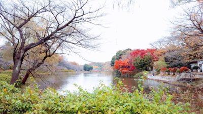 3つの大きな池を紅葉が囲みます