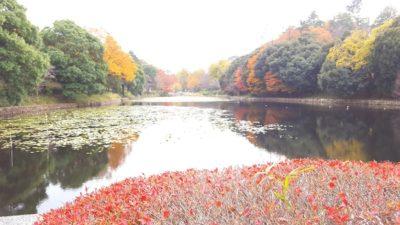 橋から見る上の池