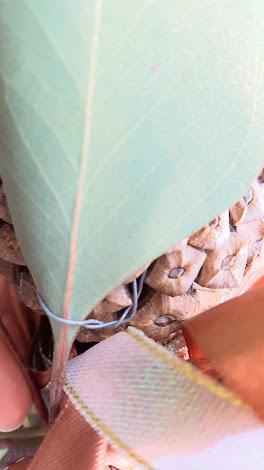 括り付けたら裏側から針金の先端を松かさの中に隠す