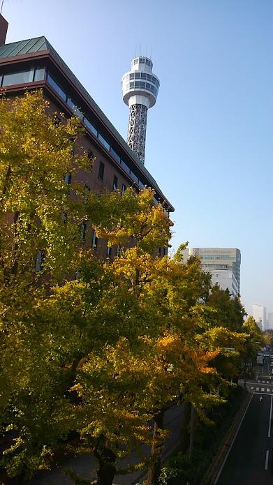 マリンタワーも並木の上から見える