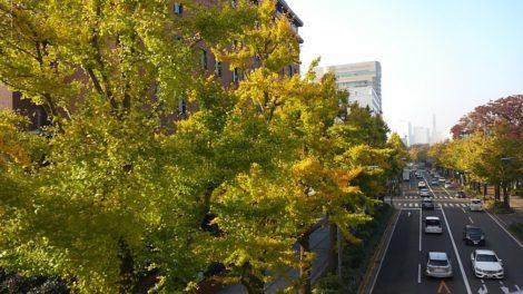 並木が美しい