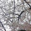 お花見を横浜の公園でするならここ 2.元町公園 エリスマン邸