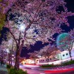 お花見を横浜の公園でするなら 4.みなとみらい日本丸~汽車道