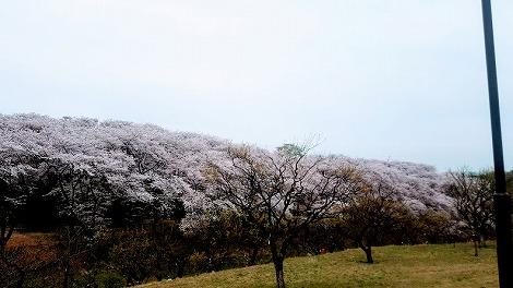 公園内の丘からの景色