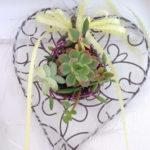 固まる土 ネルソルの使い方と多肉植物の植え方のポイントとどこで買えるかを紹介