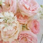 バラの剪定と植え替え 5月の場合 つるバラの花が終わったらすること