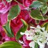 夏の切り花 おすすめの長持ちする種類は? スーパーで買うなら?