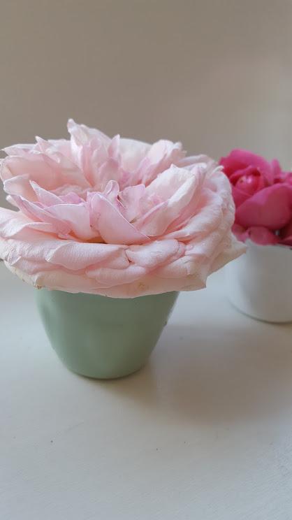 ブリキのカップとバラ