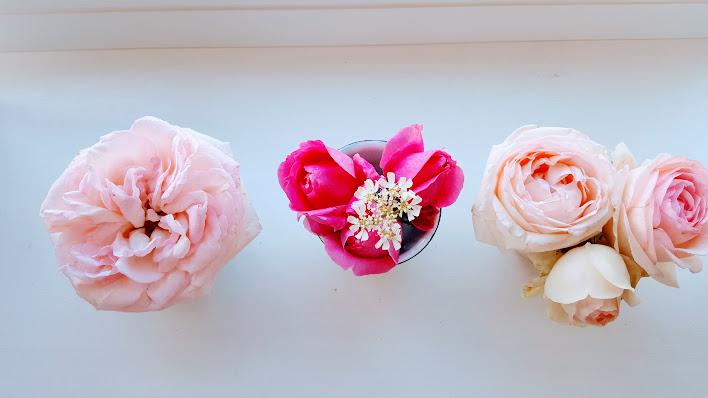 ブリキのカップとバラのトリオ