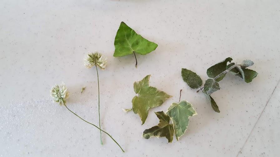 クローバーの花、ミント、アイビーのドライ