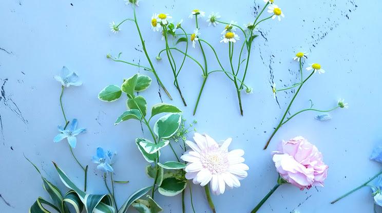 元気な花を揃える
