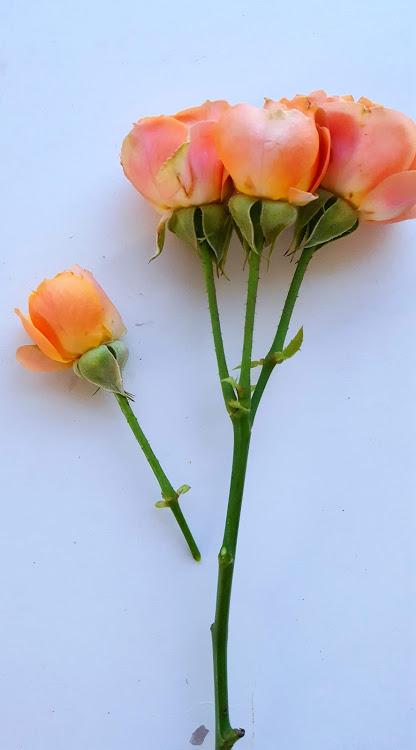 下の花は切り取る