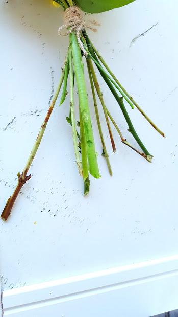茎が放射状に延びる