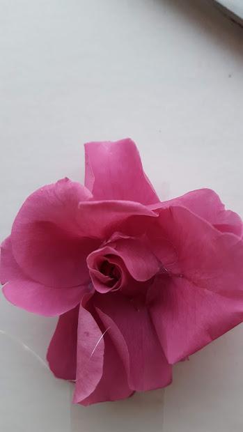 芯の周りに花びらを付ける